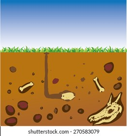 Vector illustration cut section of land with blue sky, grass, underground soil with dirt, mud, stone, bones and gophers in hole