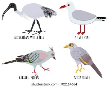 Vector illustration of cute bird cartoons - Australian white ibis, silver gull, crested pigeon, noisy miner