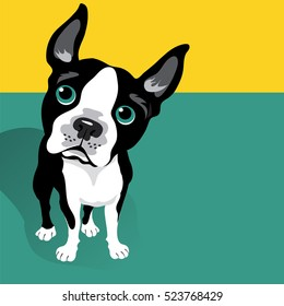 vector illustration of a cute Boston Terrier Dog with space for text. For posters, cards, banners, t-shirts