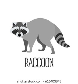 Vector illustration of cute cartoon raccoon isolated