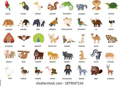 Vector illustration of cute cartoon safari zoo animals set: