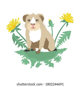 Vector illustration of a cute funny guinea pig in dandelions. Hand drawing pet.
