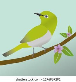 A vector illustration  of a cute Japanese white eye bird.