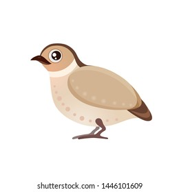 Vector illustration with cute little cartoon quail, flat icon of poultry quail isolated on white background, mascot, cartoon chicken in brown color, farm village partridge eps 10 pheasant sparrow