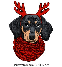 Vector illustration of a Dachshund dog for a Christmas card. Dachshund with a red knitted warm scarf and horns of a reindeer. Merry Christmas in the year of the dog. New Year's Eve 2018