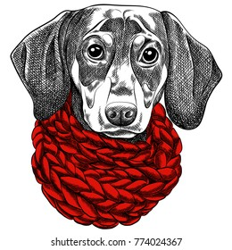Vector illustration of a Dachshund dog for a Christmas card. Dachshund with a red knitted warm scarf. Merry Christmas in the year of the dog. New Year's Eve 2018