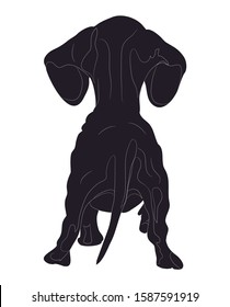 vector illustration of a dachshund that stands, view from the back, drawing silhouette, vector, white background