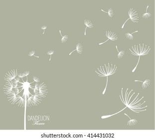 Vector illustration dandelion flower.