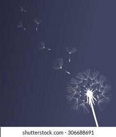 vector illustration of a dandelion flower background
