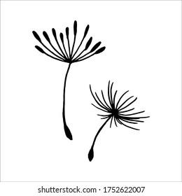 Vector illustration dandelion seed blown in the wind. Dandelion seed icon. Dandelion on a white background. Vector illustration