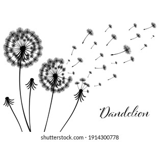 Vector illustration dandelion time. Black Dandelion seeds blowing in the wind. The wind inflates a dandelion isolated in white background