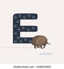 Vector illustration. Dark blue letter E with echidna's footprints, a cartoon echidna. Animal alphabet.