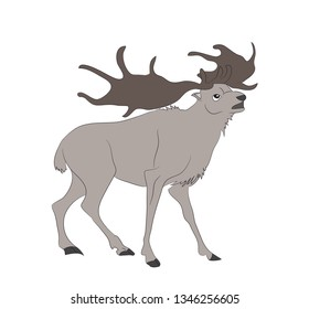 vector illustration of a deer that stands, drawing color, vector, white background