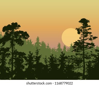 Vector illustration of a dense coniferous green forest on a hill under a morning or evening orange sky with red and yellow sunrise - with multi-layer effect and space for text
