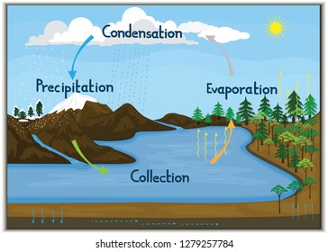 Vector illustration depicting the phenomenon of water cycle in nature.