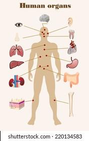 Vector illustration of diagram of human anatomy