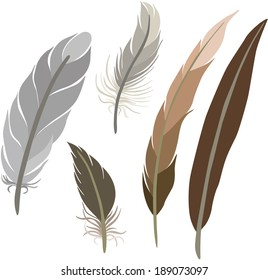 vector illustration of different feathers