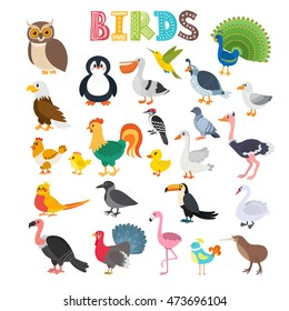 Vector illustration of different kind of birds. Cute cartoon birds. Vector illustration