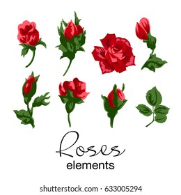 Vector illustration of different red roses and green leaves elements. Isolated flowers and leaves on white background.