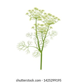Vector illustration. Dill branch on white isolated background. Template for decorating packaging in cooking, medecine, web design.