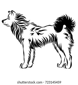 Vector illustration of an dog akita on white background