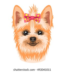 Vector illustration of a dog breed Yorkshire terrier decorated with a bow on her head