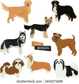 Vector illustration Dog collection Yorkshire terrier, Havanese Dog, Siberian Husky, Golden Retriever, Bernese Mountain Dog, Griffon Bruxellois, Shih Tzu,Pembroke Welsh Corgi Isolated objects set