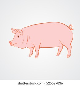 vector illustration of a domestic animal pig