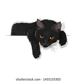 Vector illustration of a domestic black cat isolated on white. Ad space. EPS 10