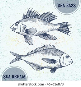 Vector illustration of doodle colorful ocean fish, sea bass and sea bream. Isolated hand drawn ink sketch in line art graphic style. Drawing engraved on vintage background. Design for advertisement.