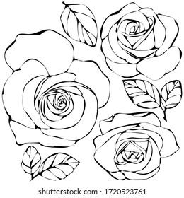 vector illustration, doodle style drawings, linear image in black, a set of flowers of roses, isolate on a white background
