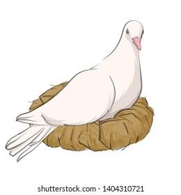 Vector illustration of dove in nest on white background