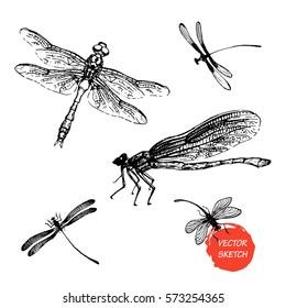 Vector Illustration of Dragonfly sketch for Design, Website, Background, Banner. Hand drawn Insect Elements. Vintage Template