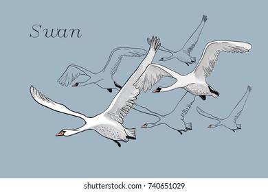 Aninimal Book: Swan Cartoon Images, Stock Photos & Vectors   Shutterstock