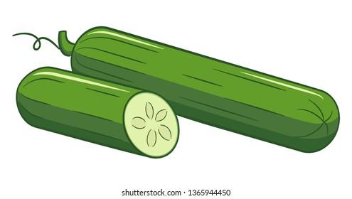 Vector illustration of a drawn cartoon salad cucumber