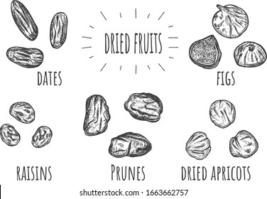 Vector illustration of dried fruits set. Dates, raisins, prunes, apricots, figs. Vintage hand drawn style.