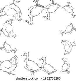 vector illustration duck and chicken contour,frame,border,doodle