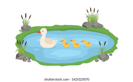Vector illustration of a duck and ducklings. Mother duck swims in the lake with small ducklings around grass.