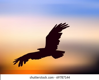 vector illustration of eagle in sunset