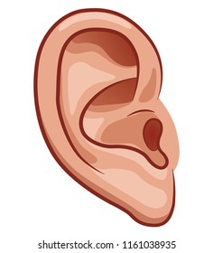 Vector illustration of ear on white background