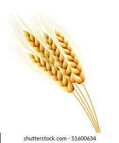 Vector illustration of ears of wheat
