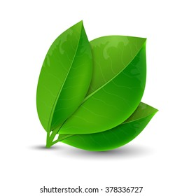 Vector illustration of ecology concept icon with glossy fresh green leaves. Eco Concept