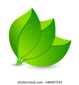 Vector illustration of ecology concept icon with glossy fresh green leaves. Eco Concept.