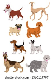 Vector illustration of eight dogs of differents breeds: a bull terrier, a greyhound, a pug dog, a golden retriever,  a beagle, a Jack Russell, a german shepherd and a bobtail; cartoon style.