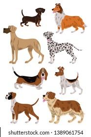 Vector illustration of eight dogs of differents breeds: a teckel,  a collie, a great Dane, a dalmatian, a basset hound, a fox terrier, a boxer and a Saint Bernard; cartoon style.