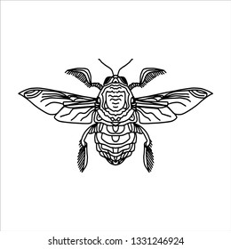 Vector illustration of the engraving highly detailed hand-drawn beetle with wings, insect on white background - vector pattern for print.