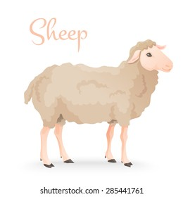 vector illustration of engraving three sheep on white background