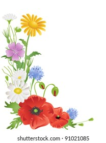 vector illustration in eps 10 format of annual wildflowers with red poppies yellow corn marigolds purple corncockle blue cornflowers and white daisies on white