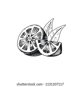 Vector illustration eps10 isolated on white background. Hand drawn retro icon, vintage ink engraving art. Black line drawing of fresh lemon slice, citrus half piece fruit, healthy organic food symbol