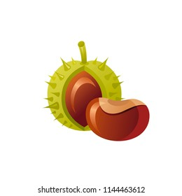 Vector illustration eps10 isolated on white background. Realistic autumn nature symbol, 3d fall holiday concept. Tree chestnut fruit nut, cute icon. Retro woodland flat sign